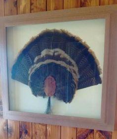 turkey fan picture